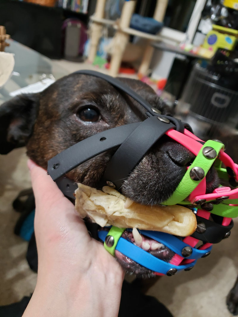 Did You Know That Not All Muzzles Are Bite-Proof? | Dog Gear Review