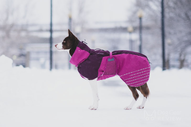Checking Dog Coats with a Thermal Camera | Dog Gear Review