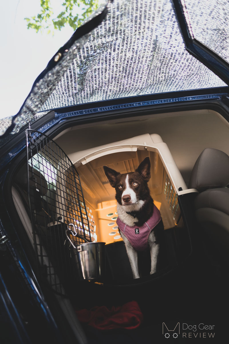 How to keep dogs cool in the summer heat | Dog Gear Review