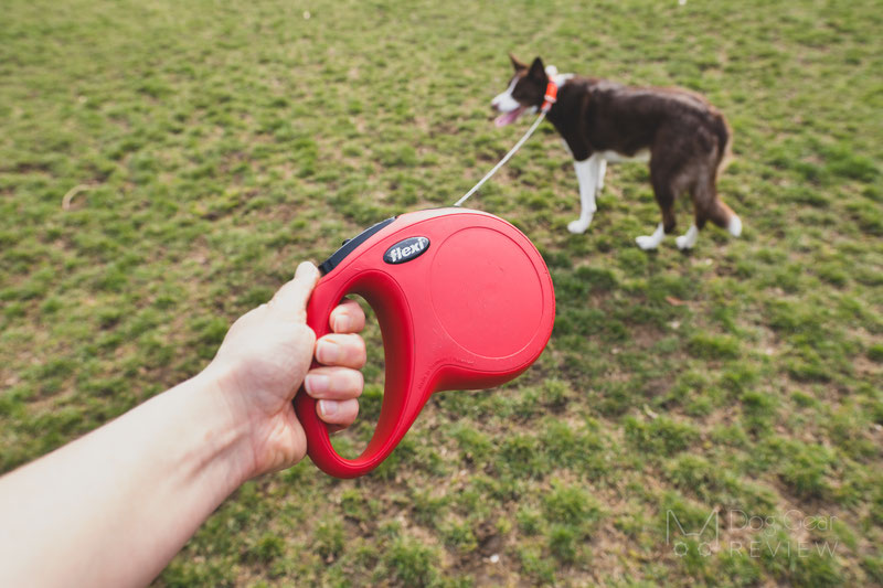Are retractable leashes bad? Are long leads better? | Dog Gear Review