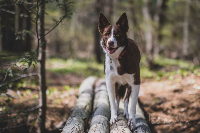 Are all these dog products necessary?   Dog Gear Review
