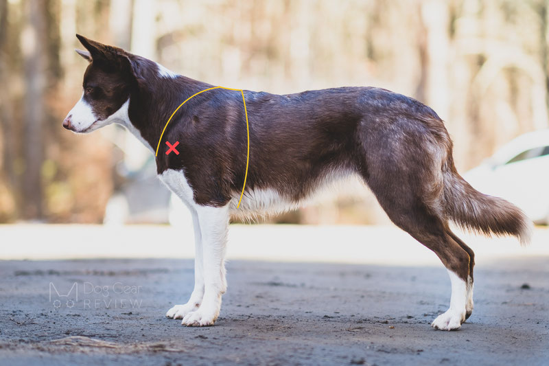 Why using a no-pull harness is not a magic solution? | Dog Gear Review