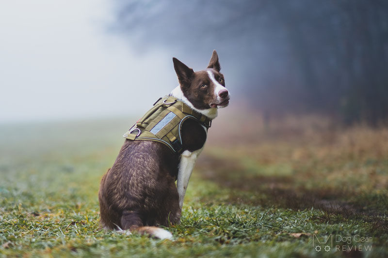 K9 Search and Rescue Gear Guide | Dog Gear Review