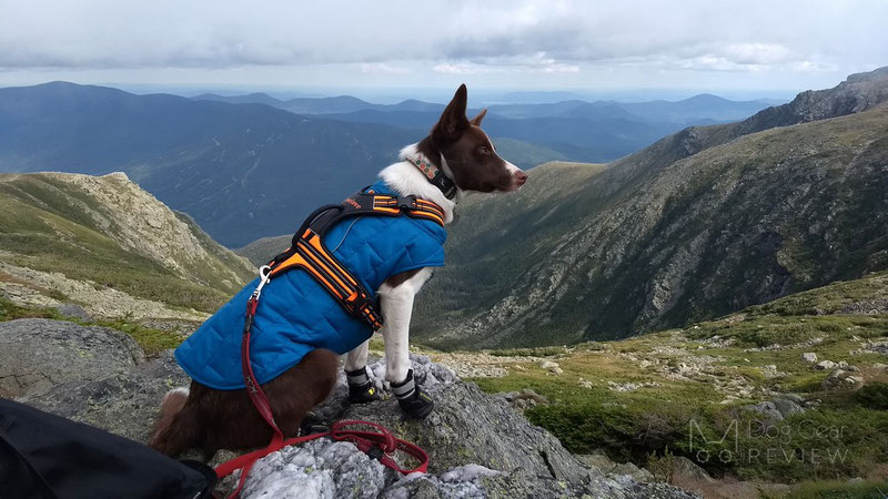 Does my dog need boots for summer hikes?   Dog Gear Review