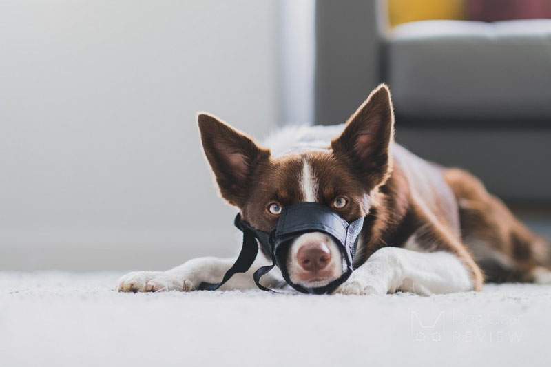 When (not) to use a textil/grooming Muzzle | Dog Gear Review