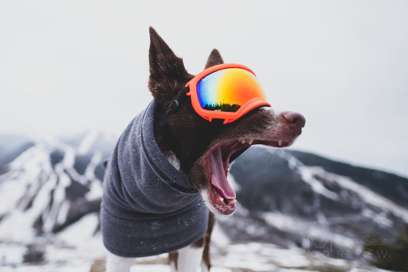 Why would a dog need goggles? | Dog Gear Review