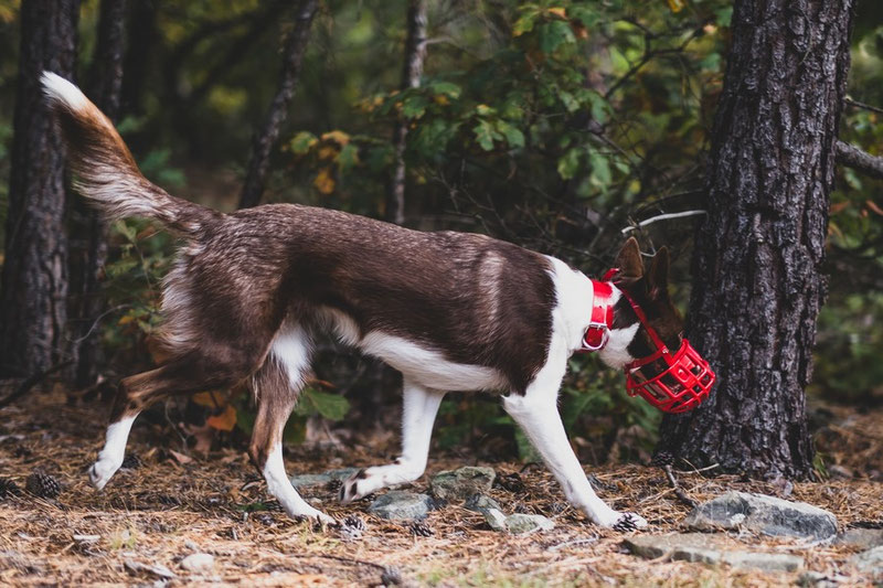 To Muzzle or Not to Muzzle | Dog Gear Review