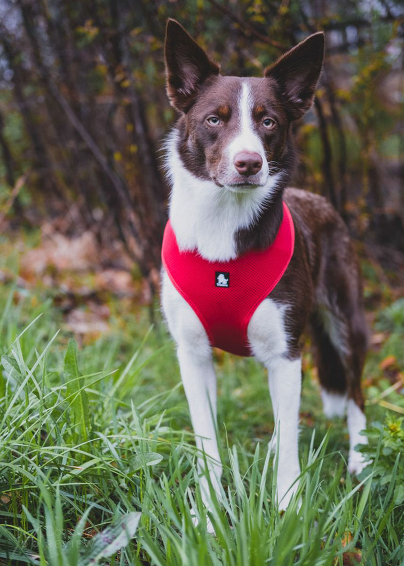 Truelove TLH1911 Mesh Harness Review | Dog Gear Review