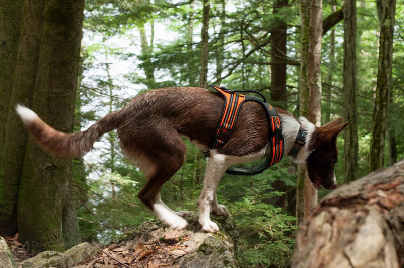 Truelove TLH5551 Harness Review | Dog Gear Review