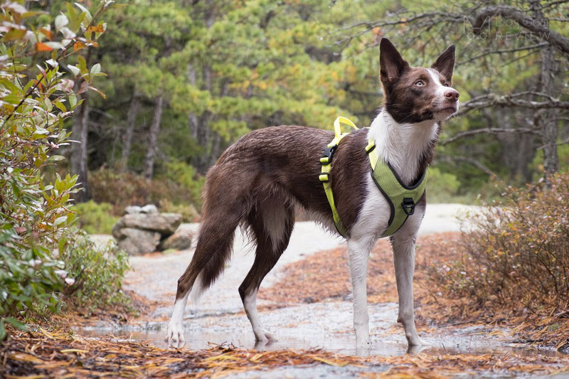 Truelove TLH6071 Harness Review | Dog Gear Review