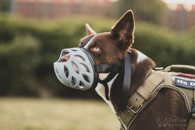 Barkless Blue Silicone Muzzle Review | Dog Gear Review