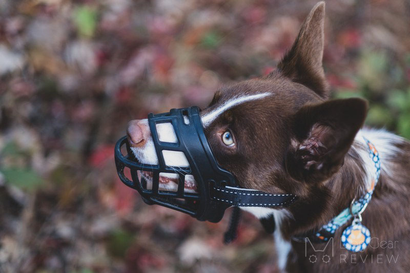 Barkless Silicone Muzzle Review | Dog Gear Review