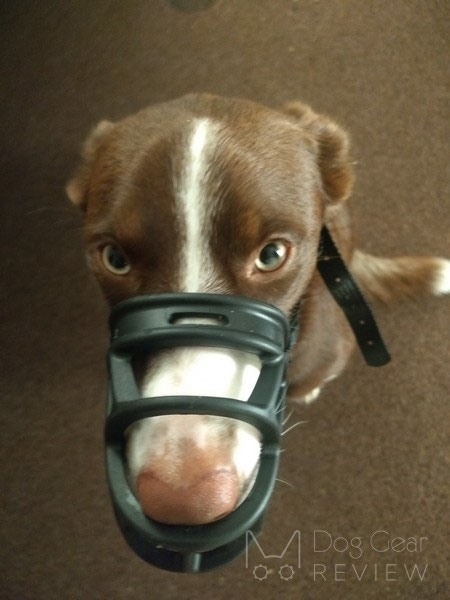 Baskerville Ultra Muzzle Review | Dog Gear Review