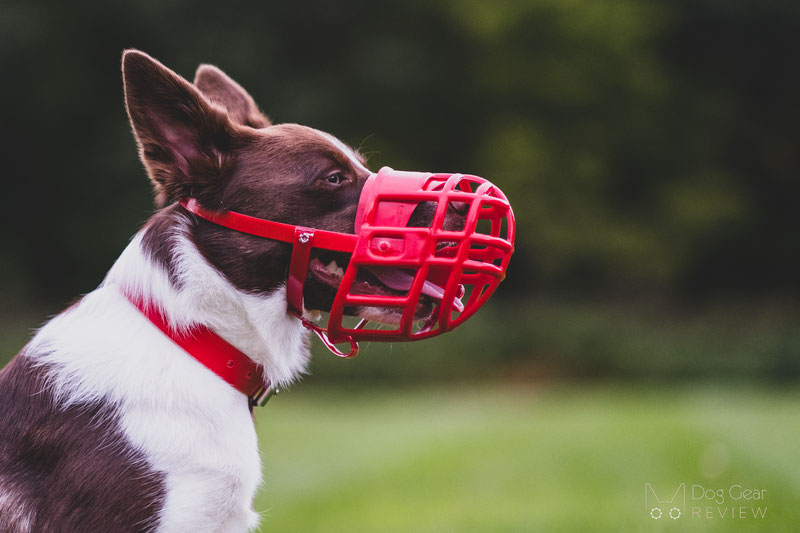 Birdwell Kennel Muzzle Review | Dog Gear Review
