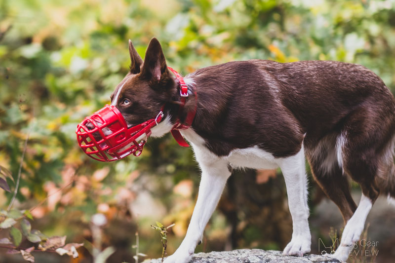 Birdwell Kennel Muzzle Review   Dog Gear Review