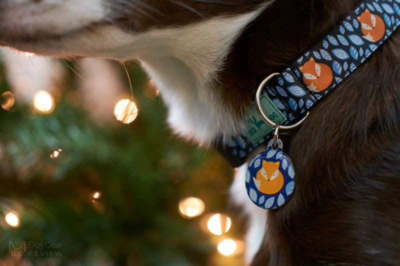 Bol-Dog Collar and Leash Review | Dog Gear Review