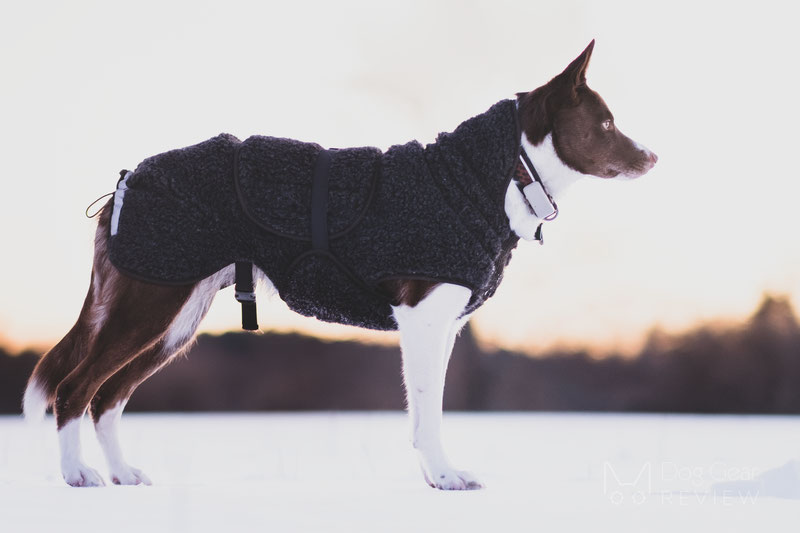 Canelana Ambassador Wool Coat Review | Dog Gear Review