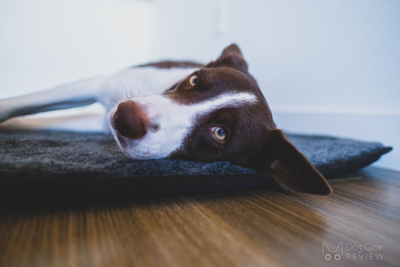 Canelana Wool Mattress with Waterproof Underside Review | Dog Gear Review