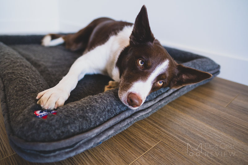 Canelana Wool Bed with Raised Edges Review | Dog Gear Review