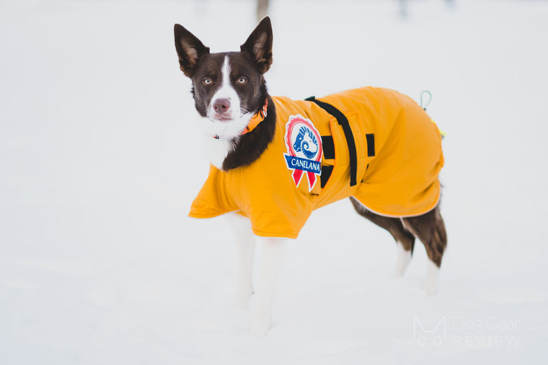 Canelana Sporting Coat Review | Dog Gear Review