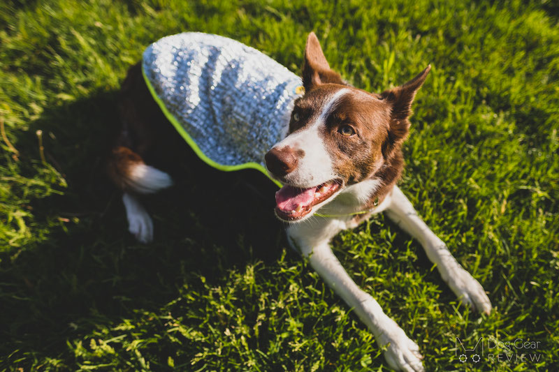 Chillybuddy Cooling Jacket Review | Dog Gear Review