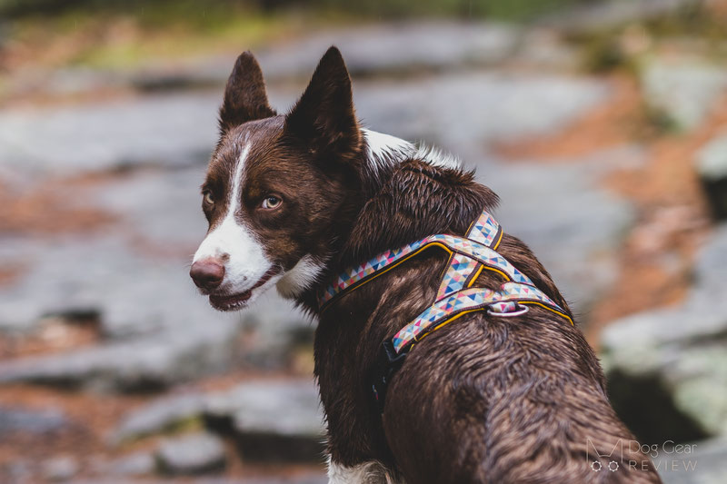 Csinieb Butterfly Harness and Leash Review | Dog Gear Review