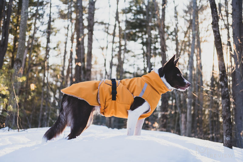 Csinieb Premium Comfort Coat Review | Dog Gear Review