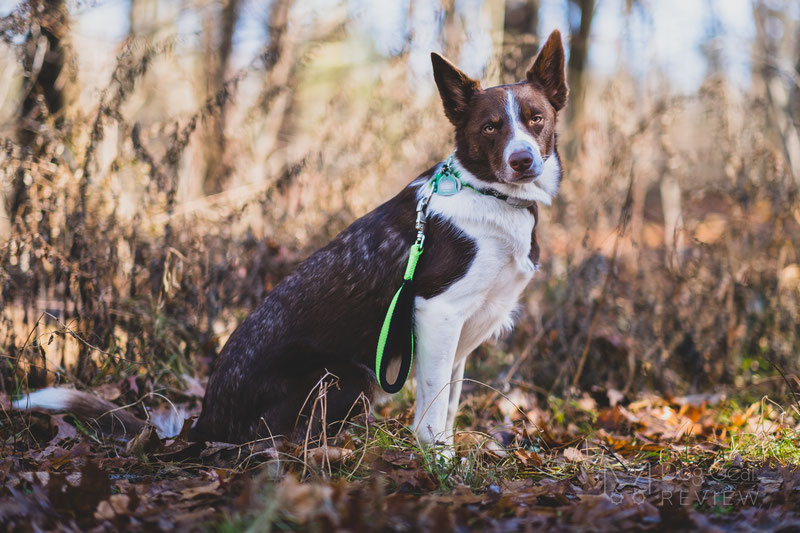 CTC Dog Gear USA 1-Dog Starter Kit Review | Dog Gear Review