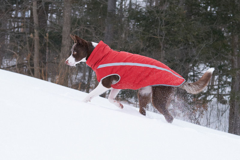 Didog Winter Jacket Review | Dog Gear Review