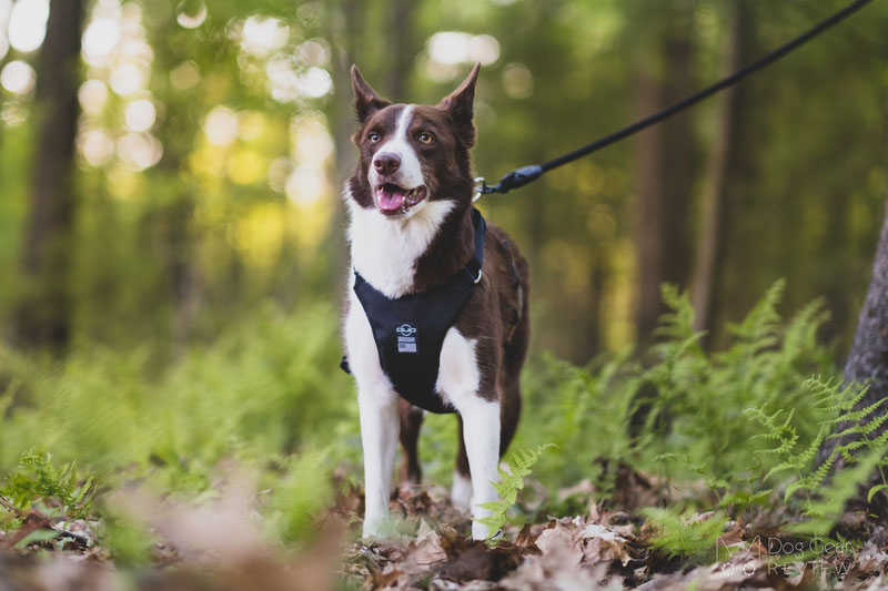 DUO 'American Adapt' Security Dog Harness Review | Dog Gear Review