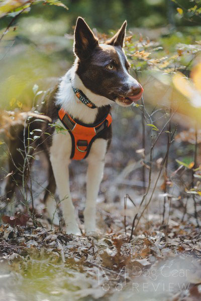 Embark Pets Adventure Harness Review | Dog Gear Review