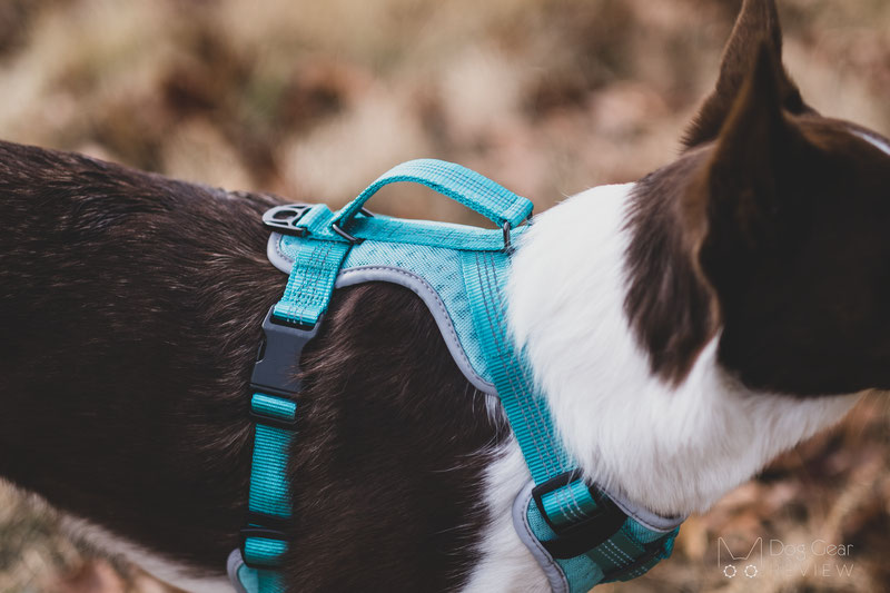Embark Pets Sport Harness Review | Dog Gear Review
