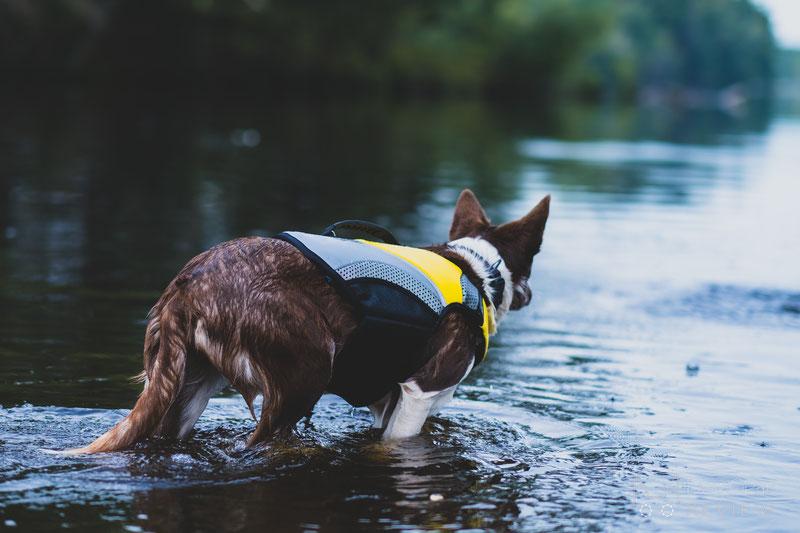 EQDOG Pro Life Vest Review | Dog Gear Review