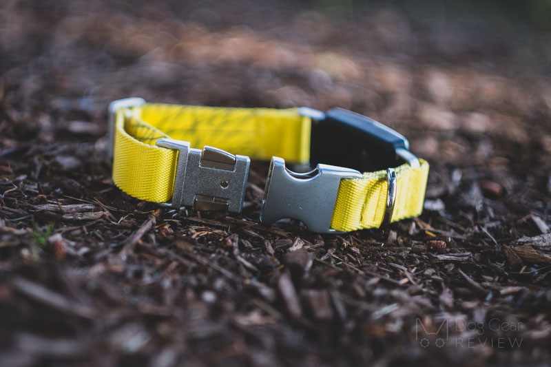 Fi Smart Collar and Activity Tracker Review | Dog Gear Review