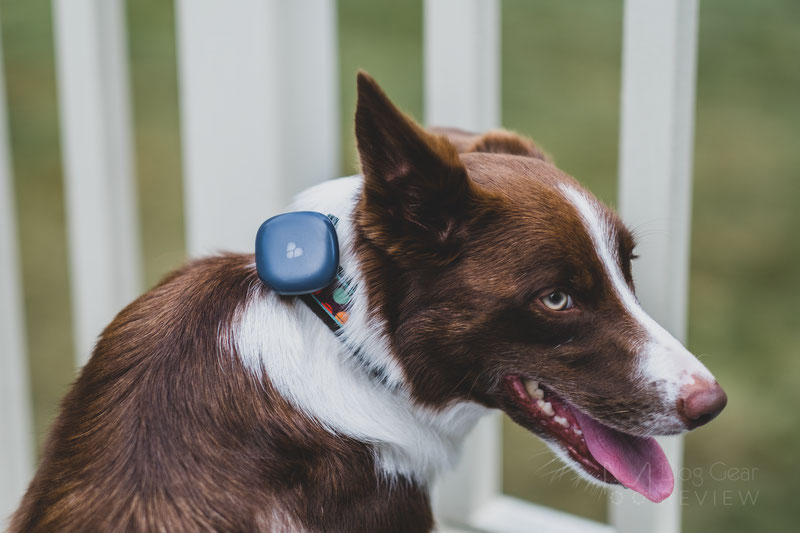 Findster Duo GPS Tracker and Activity Monitor Review | Dog Gear Review