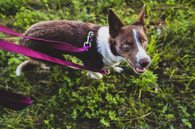 2 Hounds Design Freedom No-Pull Harness Review   Dog Gear Review