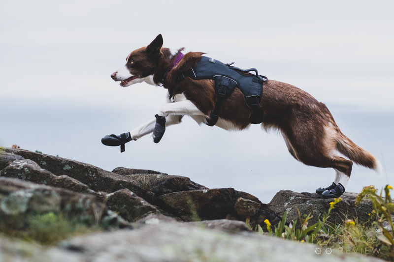 Hurtta Outback Boots Review | Dog Gear Review