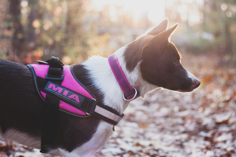 Julius-K9 IDC® Powerharness Review | Dog Gear Review