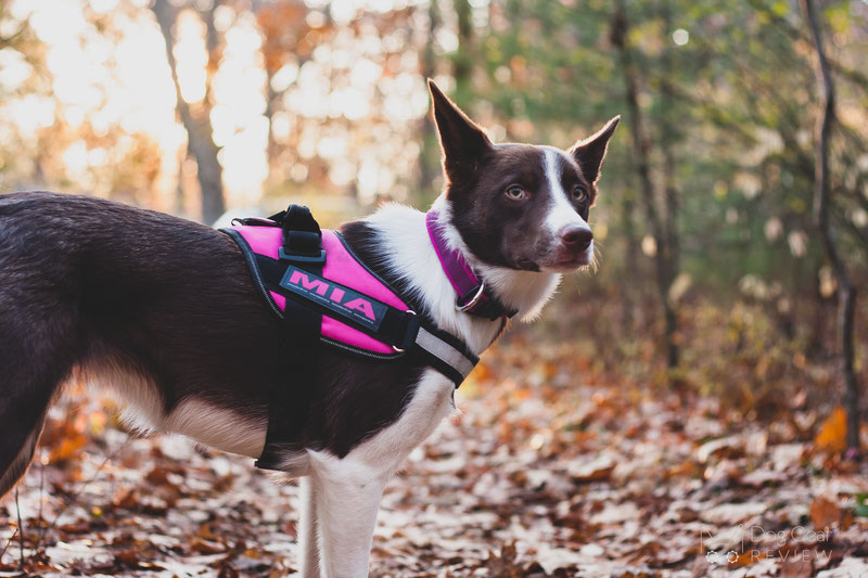 Julius K9 Idc Powerharness Review Dog Gear Review