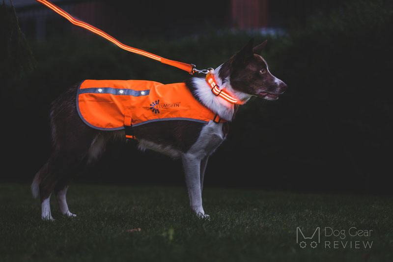 Illumiseen LED Dog Vest Review | Dog Gear Review