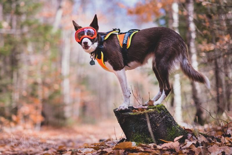 Julius-K9 Mantrailing Harness Review | Dog Gear Review