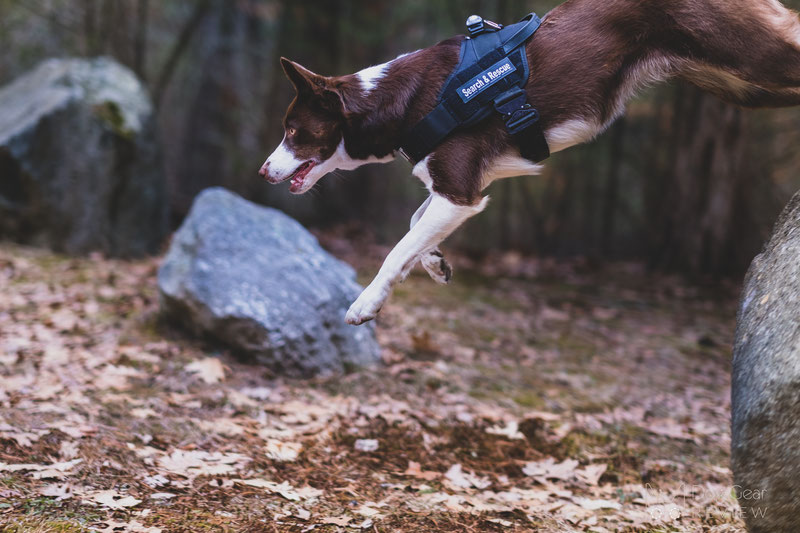 Julius-K9® IDC® Stealth® Powerharness with Cobra®buckles Review | Dog Gear Review