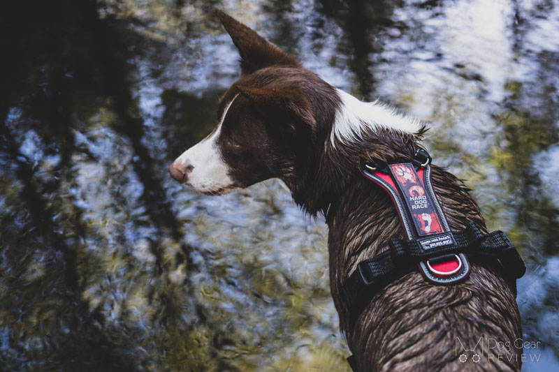 Julius-K9 Hard Dog Race® Harness Review | Dog Gear Review