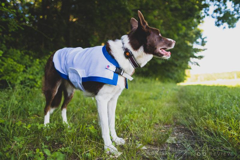 Saratoga Horseworks K9 Kooling Coat Review | Dog Gear Review