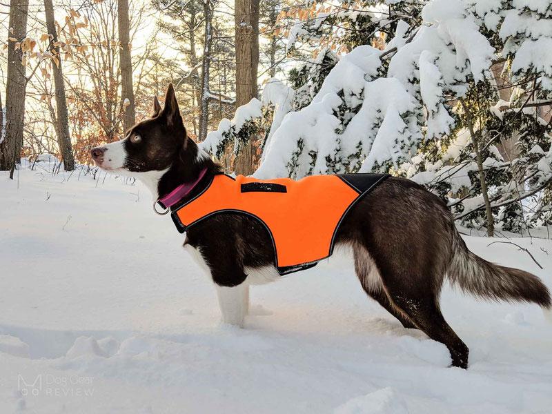 Julius-K9 Neoprene Dog Jacket Review | Dog Gear Review