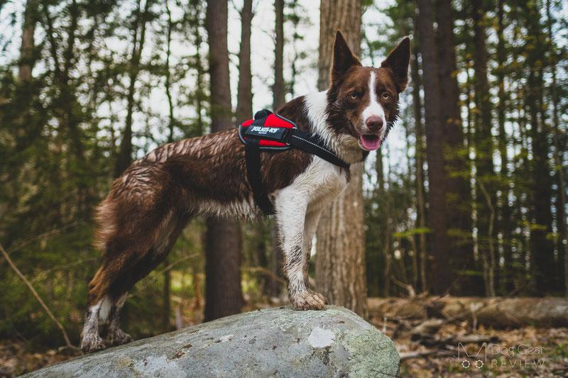 Julius-K9 IDC® Powair Summer Harness Review   Dog Gear Review