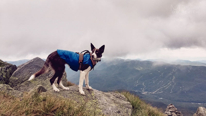 Kurgo Loft Jacket Review | Dog Gear Review