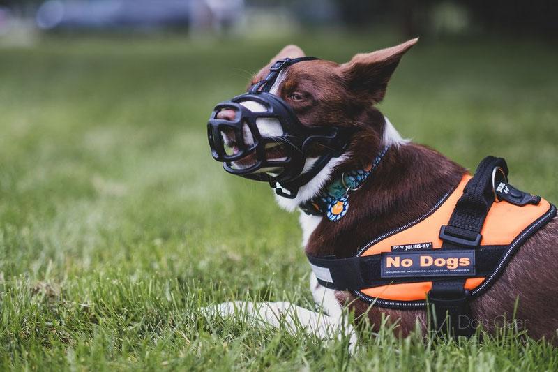 Mayerzon Basket Muzzle Review | Dog Gear Review