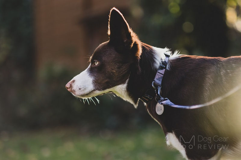 MOD Collar and Leash Review | Dog Gear Review