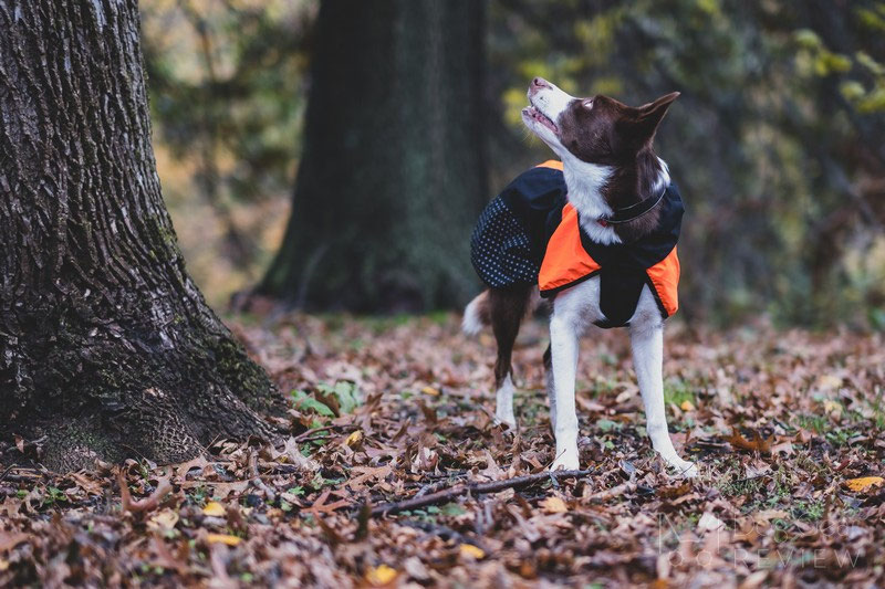 Non-stop Dogwear Beta Pro Raincoat Review | Dog Gear Review